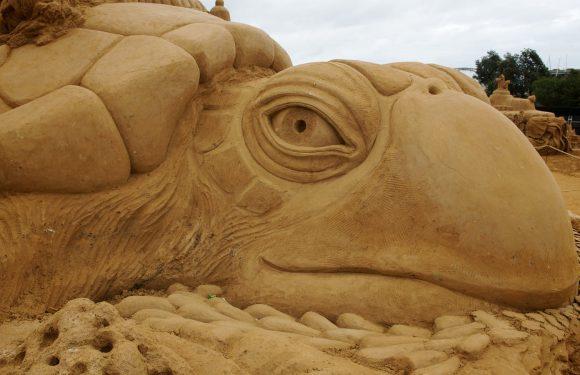 """OCEAN"" A Sand Sculpting Adventure"