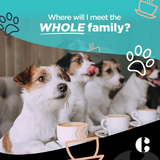 Pet Friendly Dining at The coffee Club